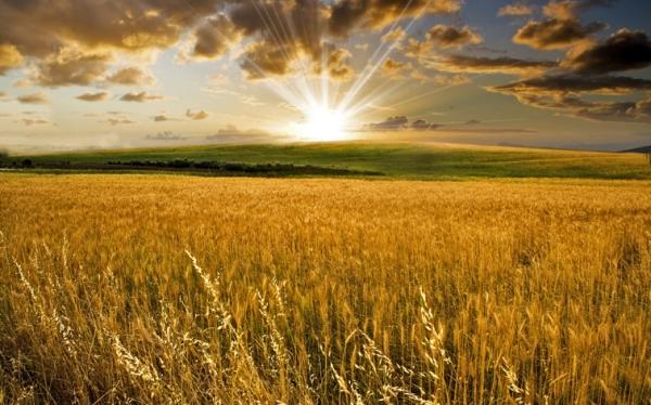 Resultado de imagen para cosecha del fin del mundo